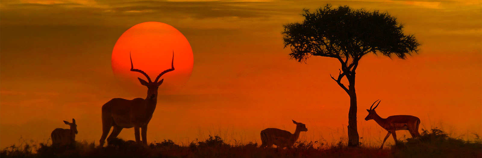 photo of an African sunset with silhouette of animals