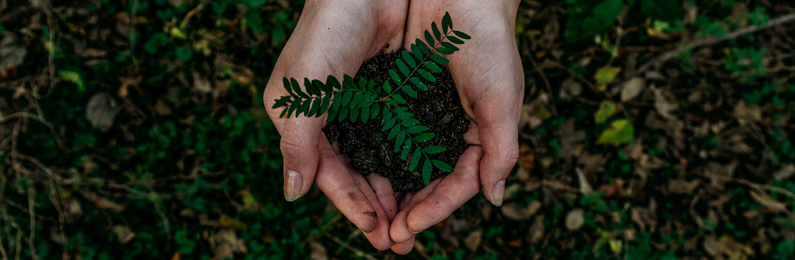person holding soil and a plant
