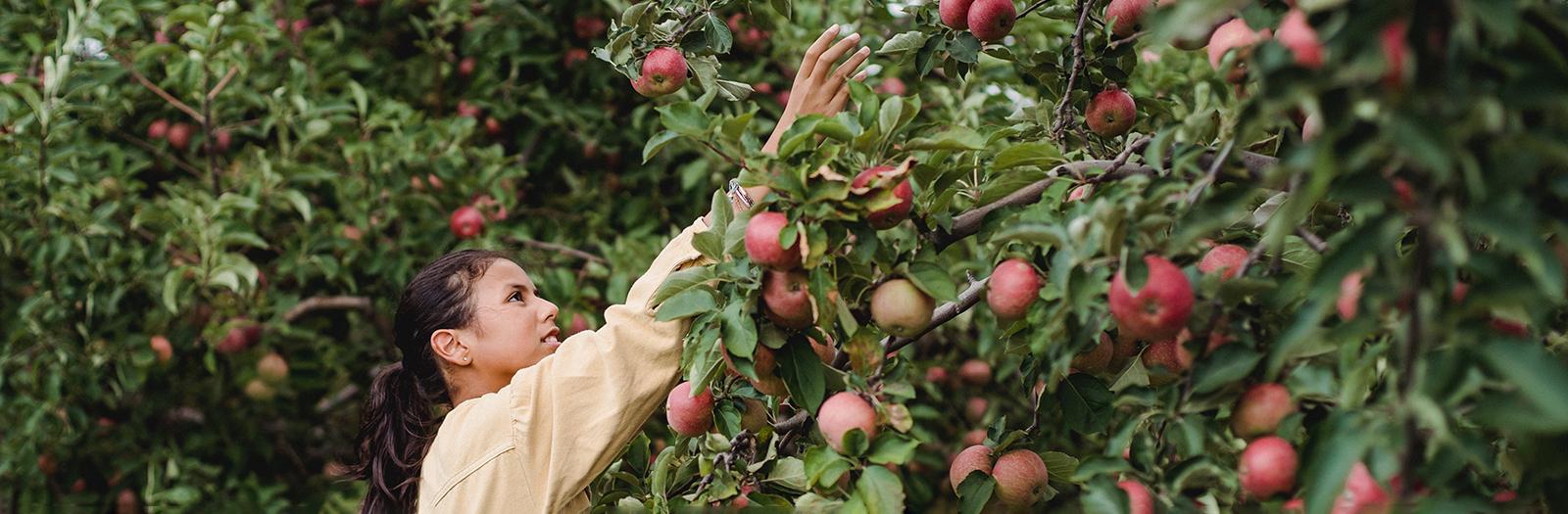 girl picking an apple