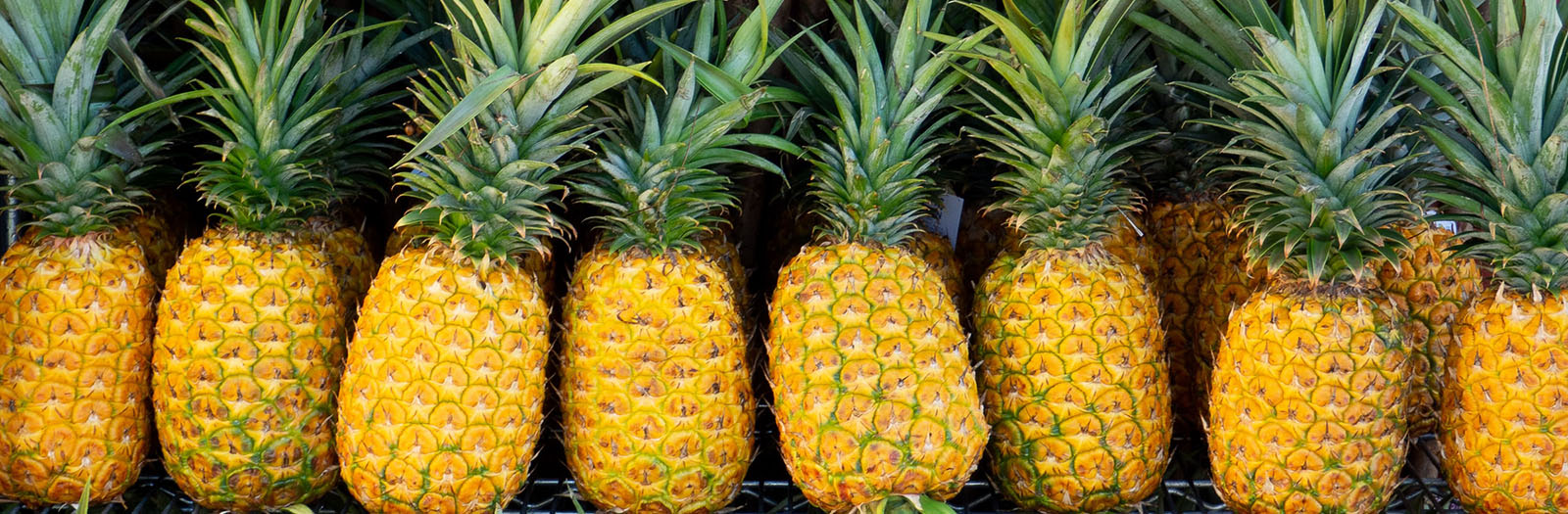 image of a row of pineapples